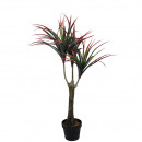 Dracaena potted 100cm height, red and green